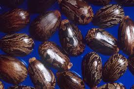 hemp seed seeds